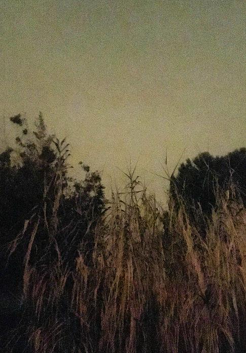 photographe Aurélie Schopfer artist holga Cheap Photography Holga argentique enfance fleurs de sureau