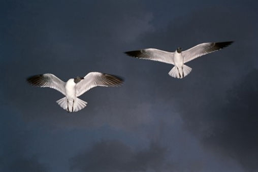 In_Flight.jpg