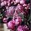 Thumbnail: Floral Escape  - 12th June