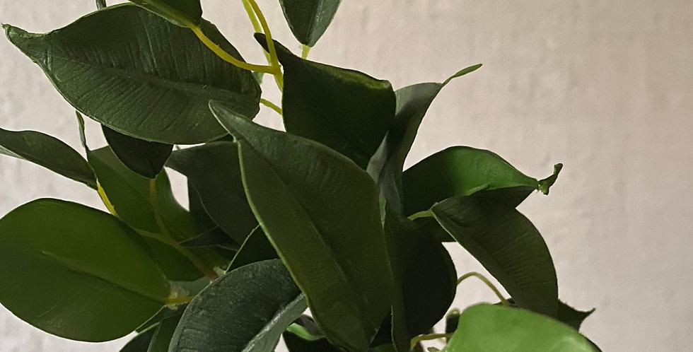 Green Salal Foliage
