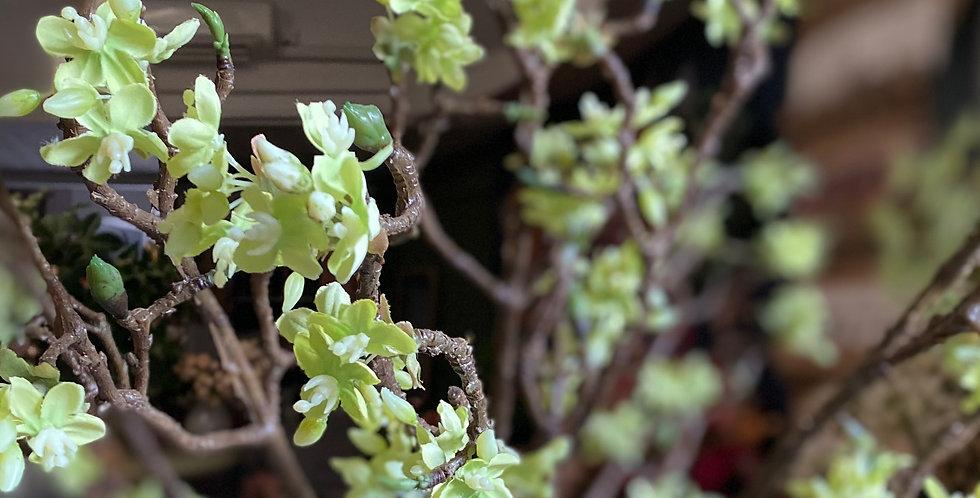 Green Blossom Spray