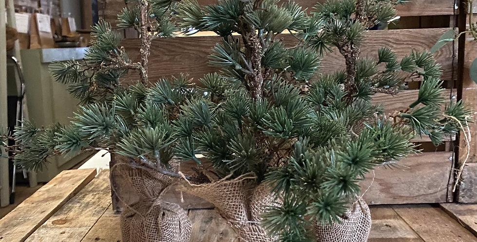 Mini Cedar Tree