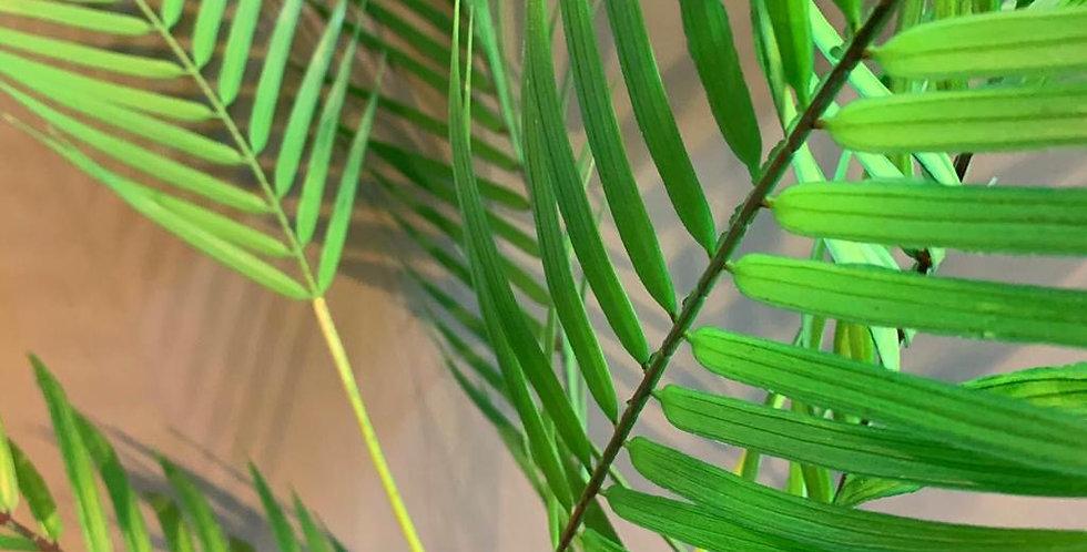 Palm Leaf Spray