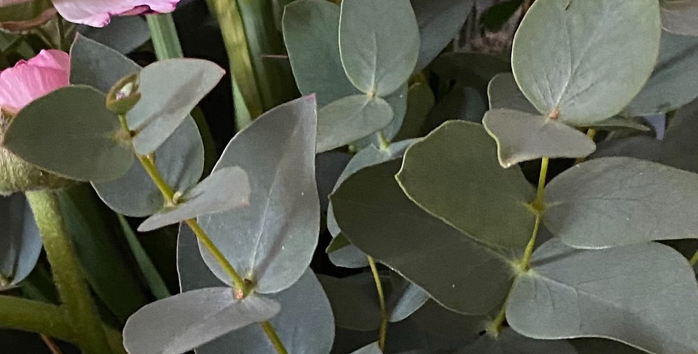 Eucalyptus Bunches - 26th February
