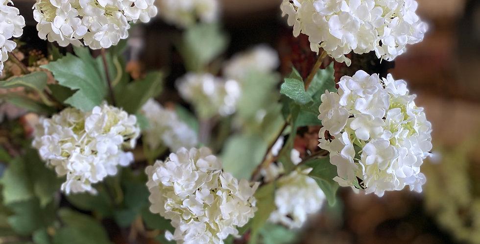 White Viburnum