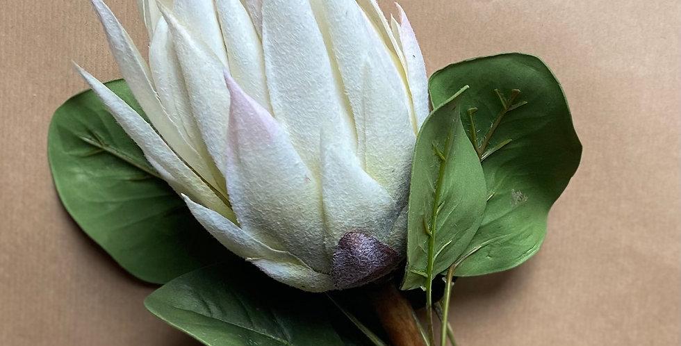 King Protea - White