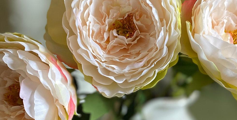 Pale Peachy Pink Peony Rose