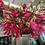 Thumbnail: Pink Magnolia