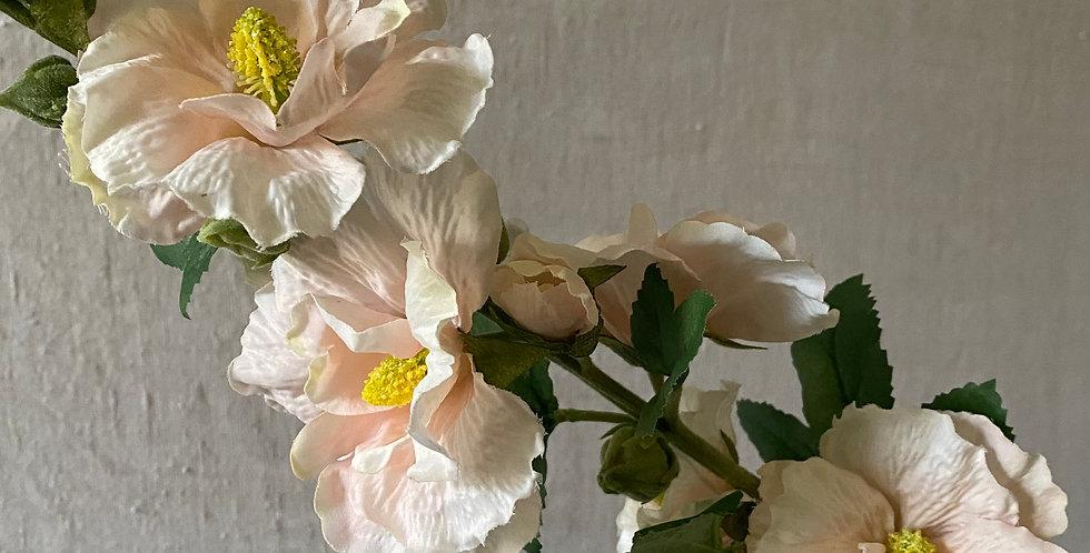 Peachy/Cream Hollyhock
