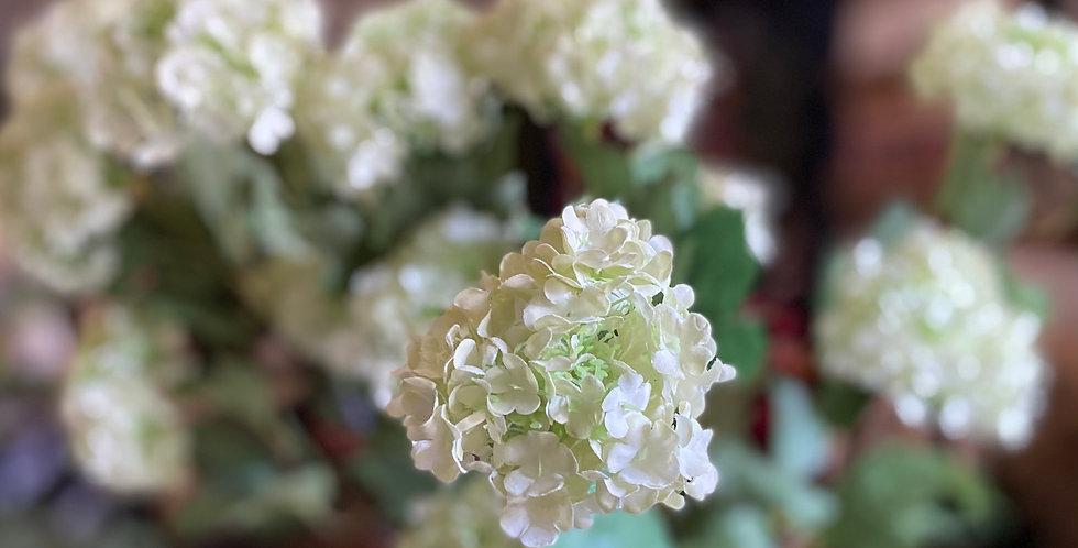 Green Viburnum