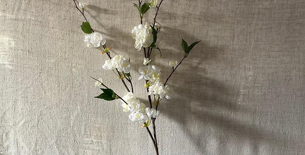 Tall White Blossom