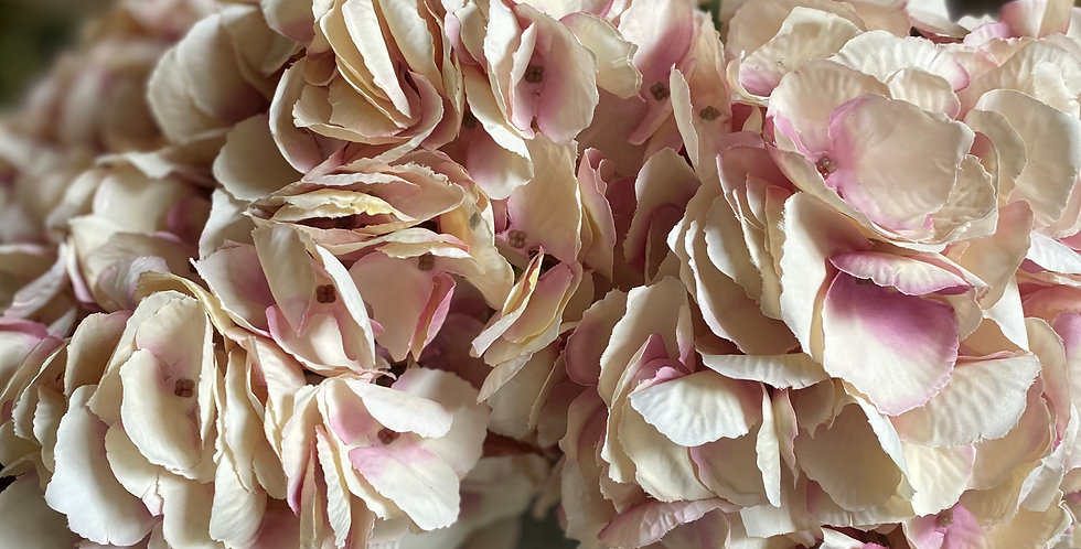 Dusky Pink Hydrangea