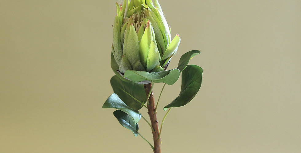 King Protea -Green