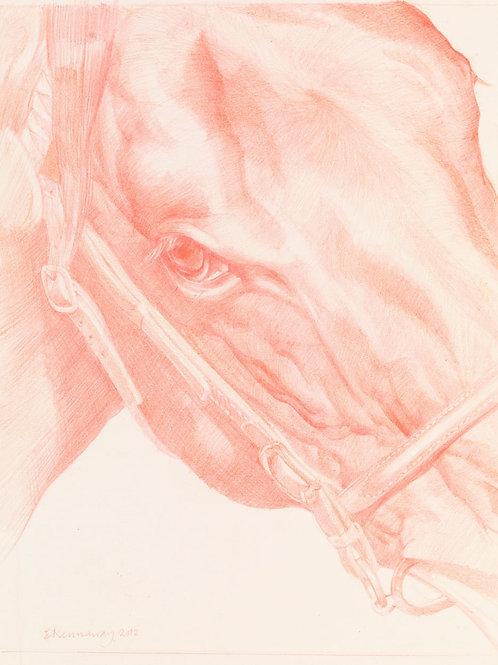 Equine Head 3