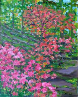 Botanical Garden in Spring
