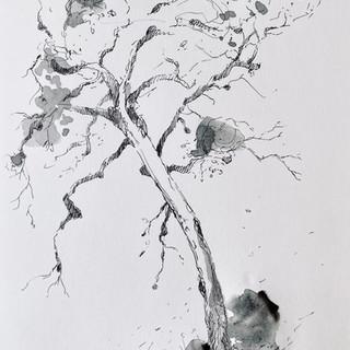 Tree Stu