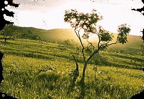 Pampa e Cerrado - Nome do festival.png