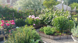 86 – Chéneché – Jardin du Moulin – jardin de curé - ©  Delphine Pasquinet