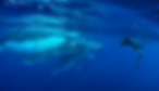 Manolo_Whale.png