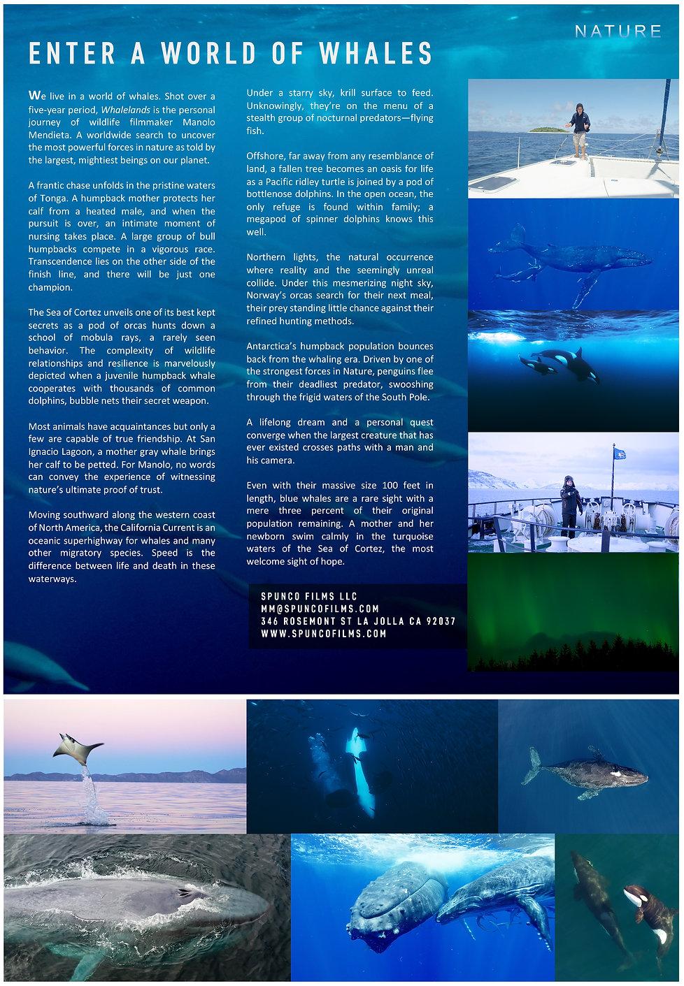 Whalelands_Exexutiveshreet_REVISED_JPG.jpg