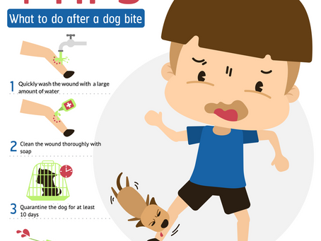 Five Diseases you can get from your pets