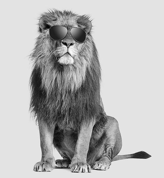 Lion with sunnies 2.jpg
