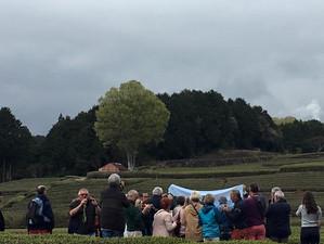 茶畑に外国人観光客増