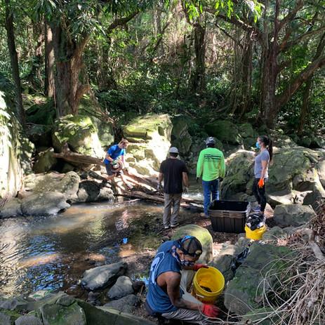 Nuʻuanu (Town Boulders) Clean up