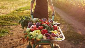 Sníte denně dostatek živin? Nový přístup stravovacích protokolů