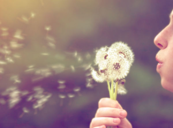 a girl blowing on a dandelion done with