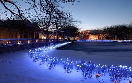 Brookfield Zoo Blue LED Lights
