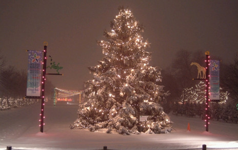 Brookfield Zoo Holiday Tree