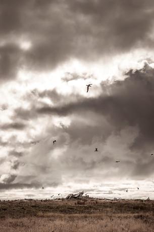 Oiseaux dans la tempête