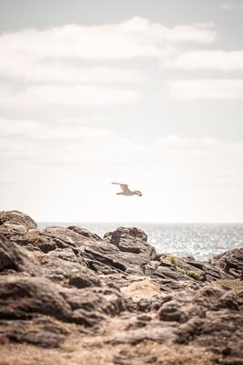 Vol au-dessus d'un caillou