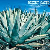 Desert Cacti.jpg
