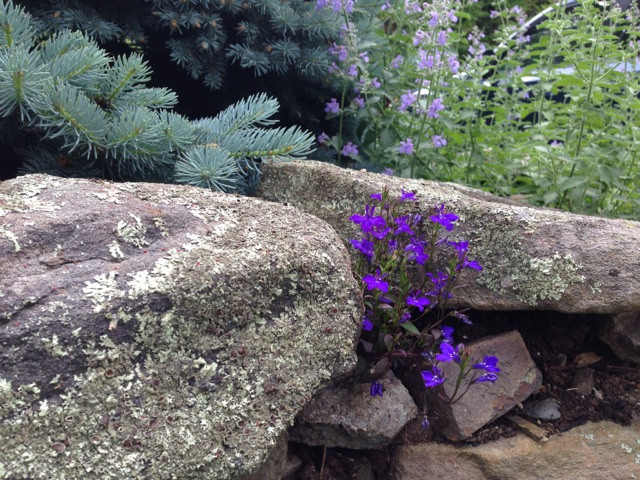 Purple flowers in stone wall