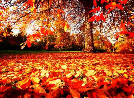 Happy Fall Equinox
