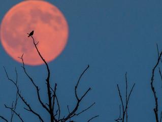 Happy Full Strawberry Moon