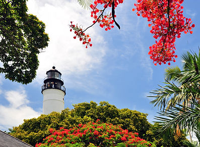 Lighthouse poinciana.jpg