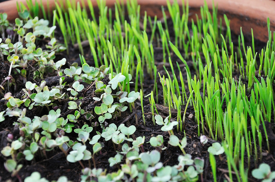 sprouts-763457_1920.jpg