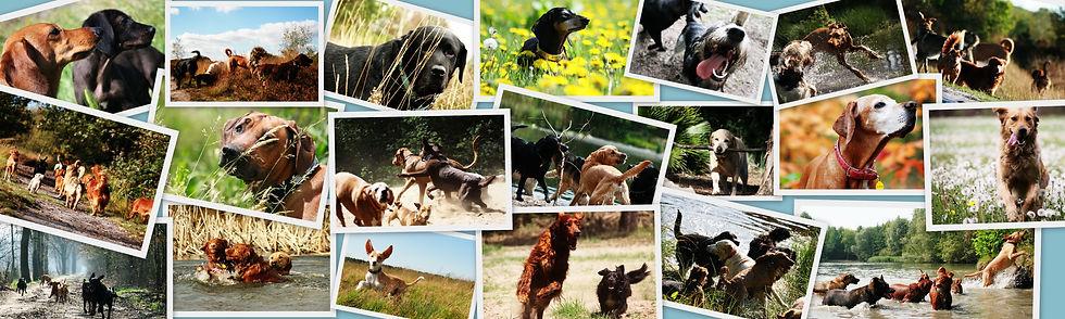 Hondenuitservice ALle Riemen Los uit Eindhoven kunt u inzetten als het u niet uikomt om uw hond uit te laten.