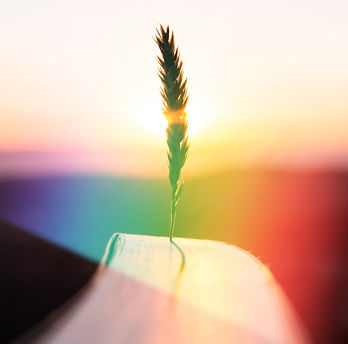 Inspiration and creativity concept. Wheat spike with the warm sun rays of sunset or sunris