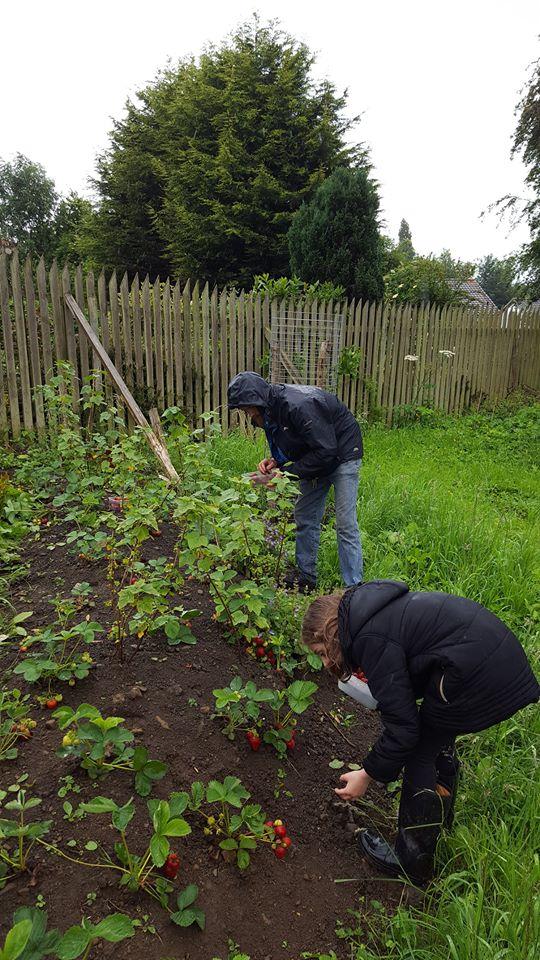 Spot of gardening