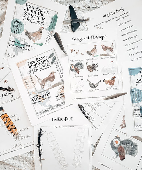 Bird Study, Nature study, Charlotte Mason, Homeschool, Printable,