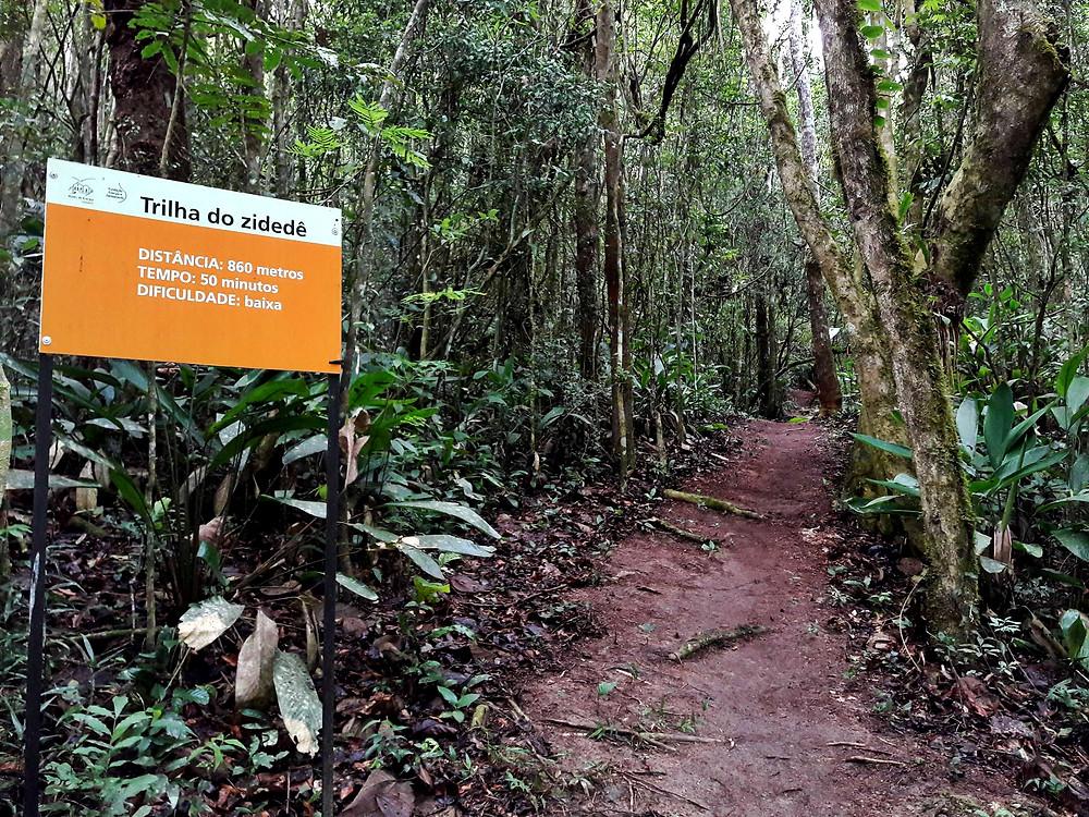 Trilha que circunda o reservatório de água da Usina de Salesópolis é local onde  foram observadas espécimes da ave Zidedê. Crédito de foto: Elvis Japão