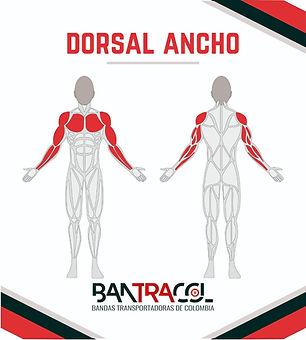 Gimnasios al aire libre musculos dorsal
