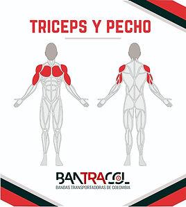 Gimnasios al aire libre musculos triceps