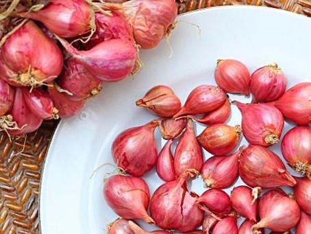 Shallots Cultivation| Health Benefits| Pest & Disease Control| Profits in India| BestPractiz-Agri