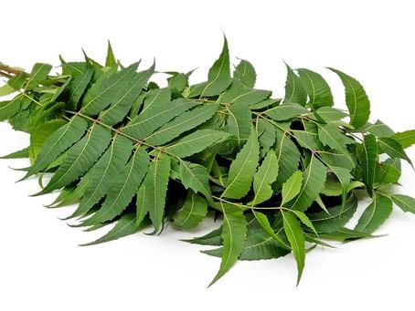 Neem Tree Cultivation in India| Health Benefits| Pest & Disease Control| Profits| BestPractiz-Agri
