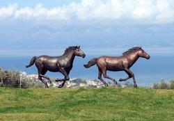 chevaux en place sur pelouse